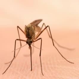 Boutique moustique